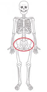 骨盤矯正解説